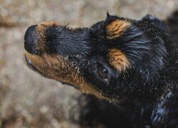 Cane evita il bagno