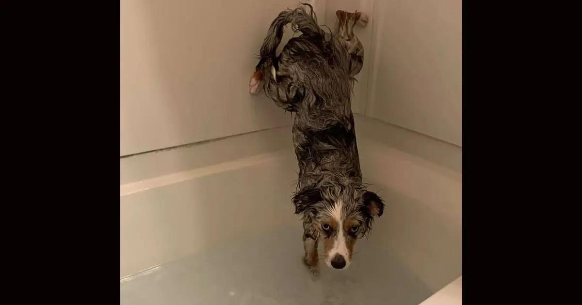 Come evitare di fare il bagnetto