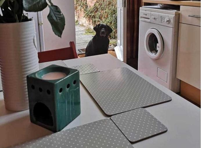 Cucciolo nero aspetta il cibo