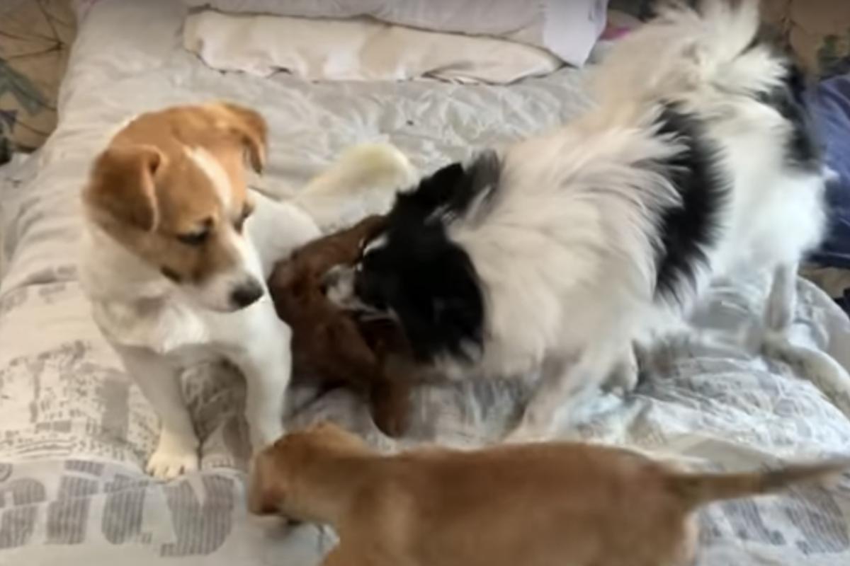 cane lucy salvataggio