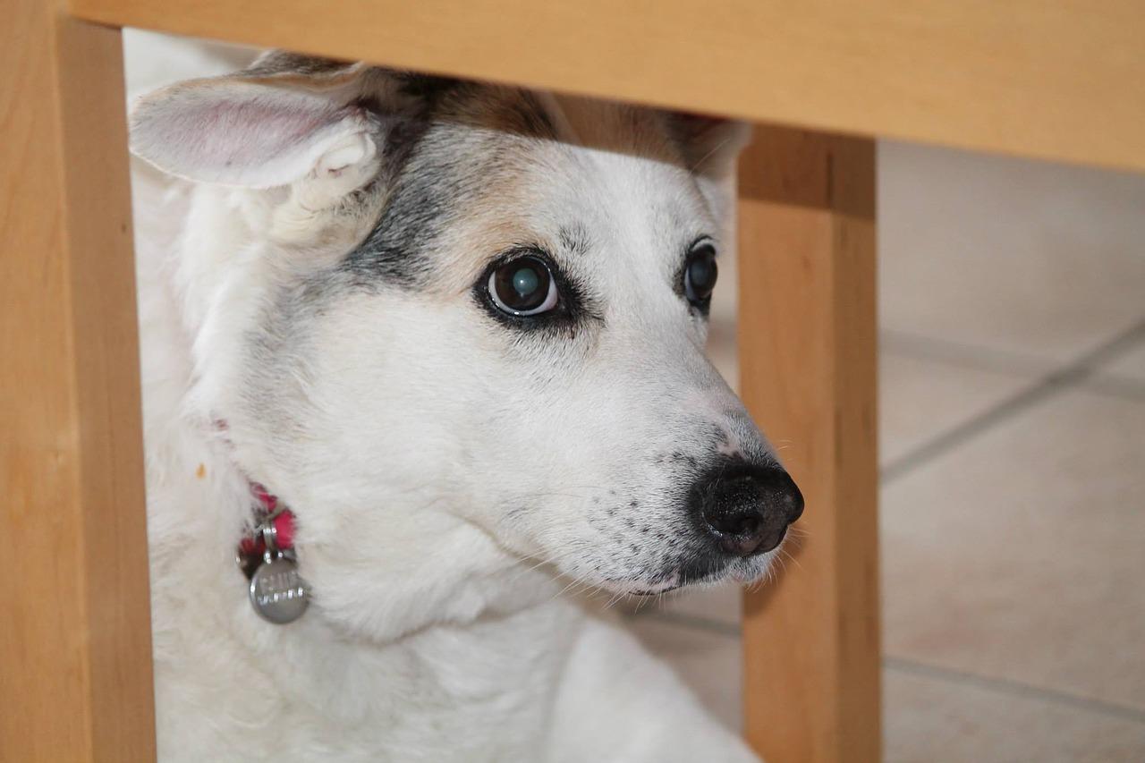 Cane morto per colpa dei proprietari
