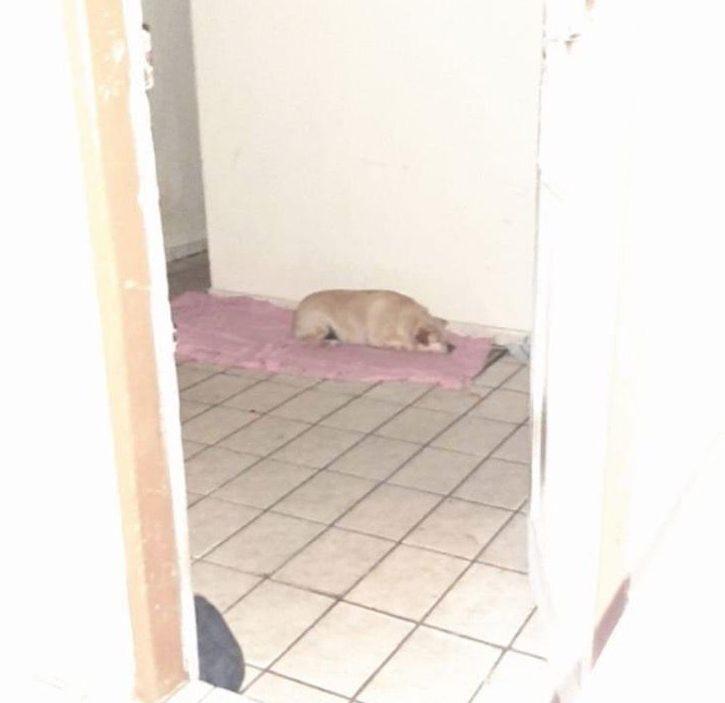 Cagnolino morto da solo