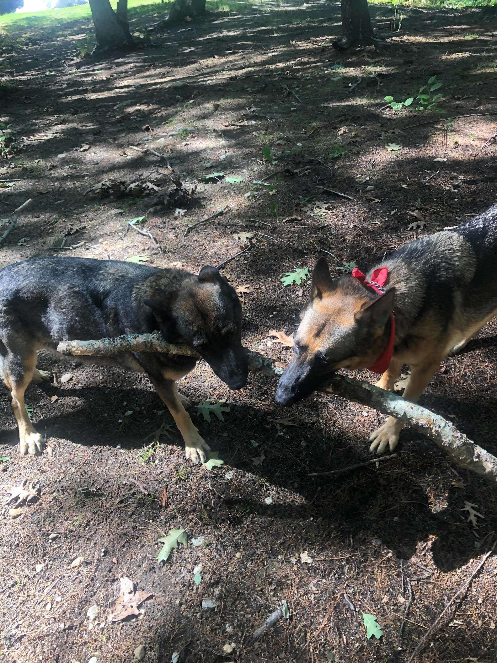 Il cane Gaia  appassionato di bastoni