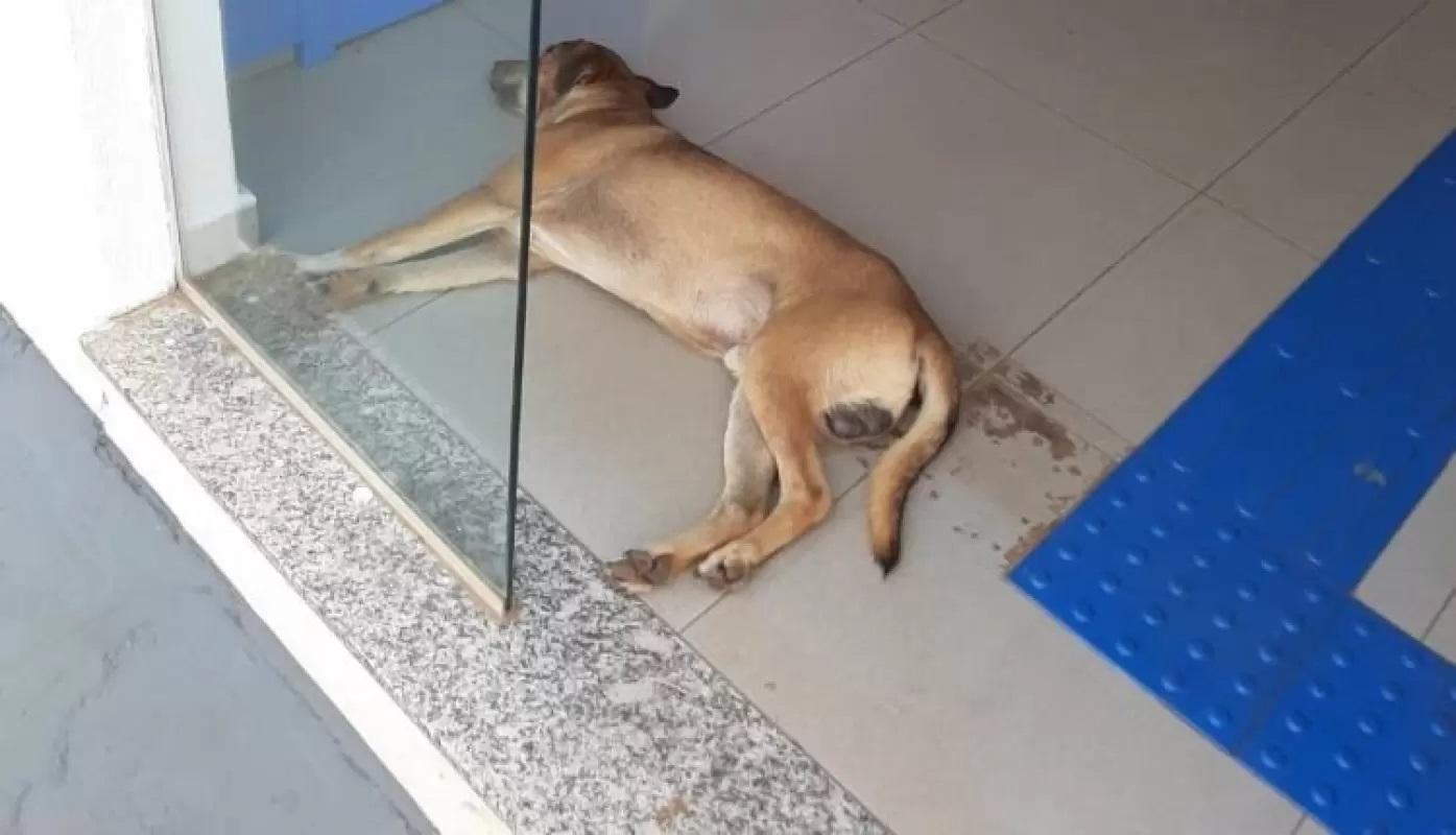 Cucciolo dorme nella banca