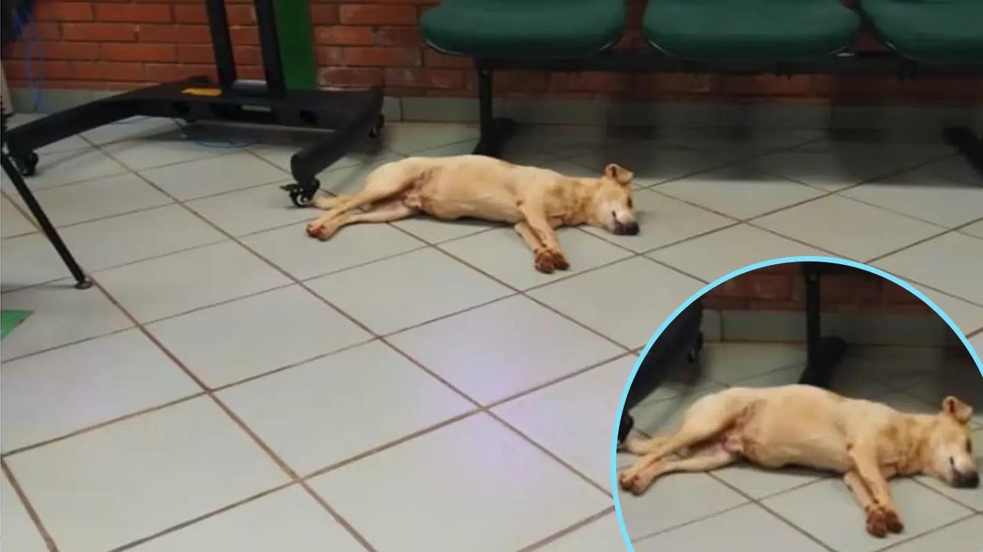 Il cucciolo senza casa dorme per terra