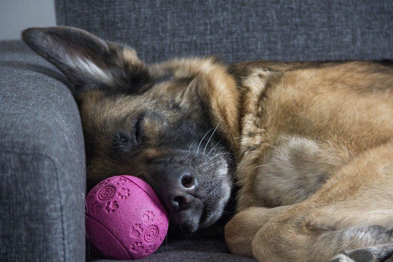 Cane dorme in casa