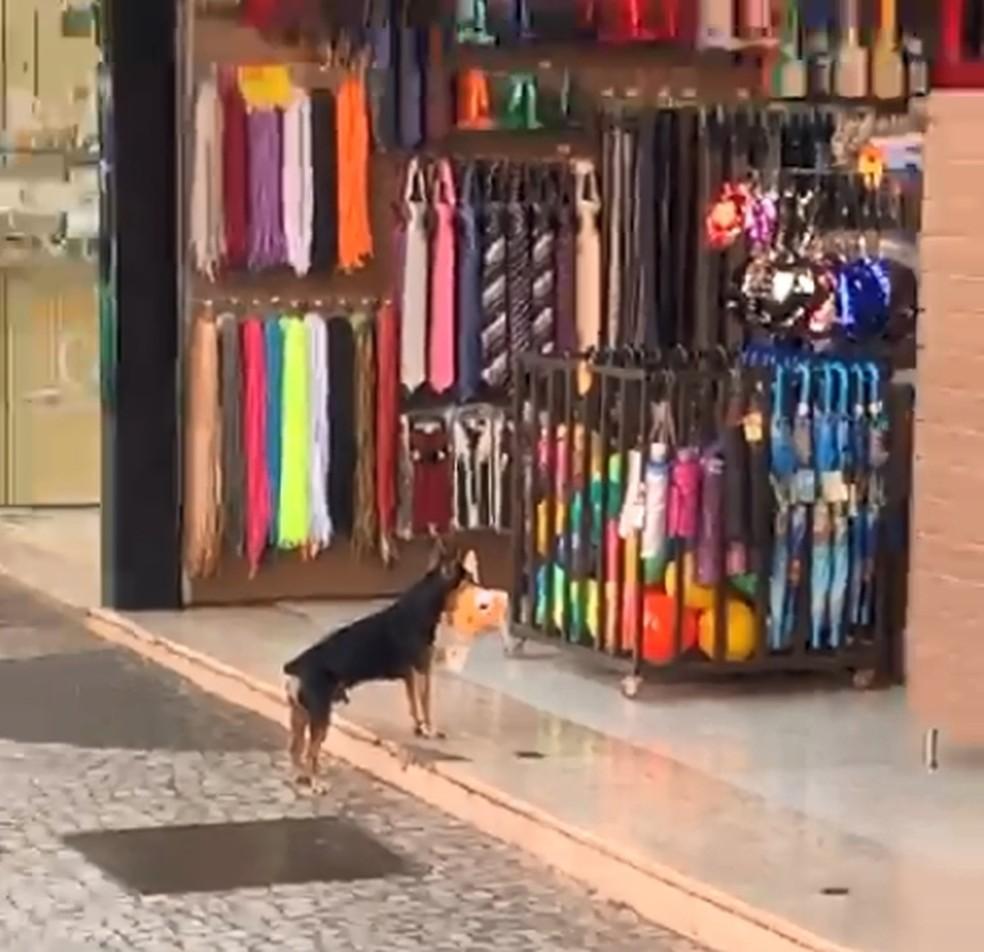 Il ladro a quattro zampe in negozio