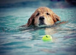 Cane salta in piscina