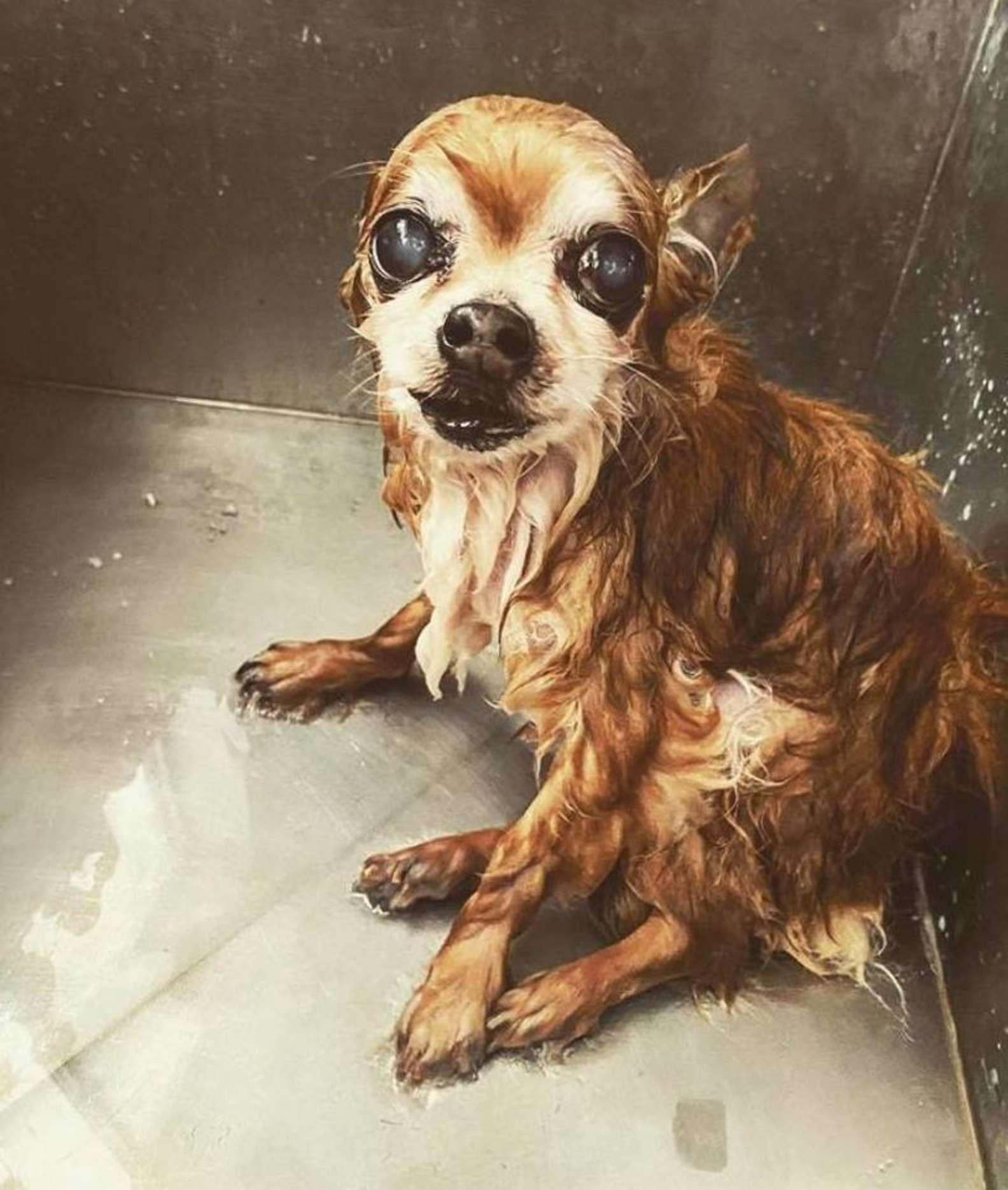 Il  cucciolo non sopporta il bagno