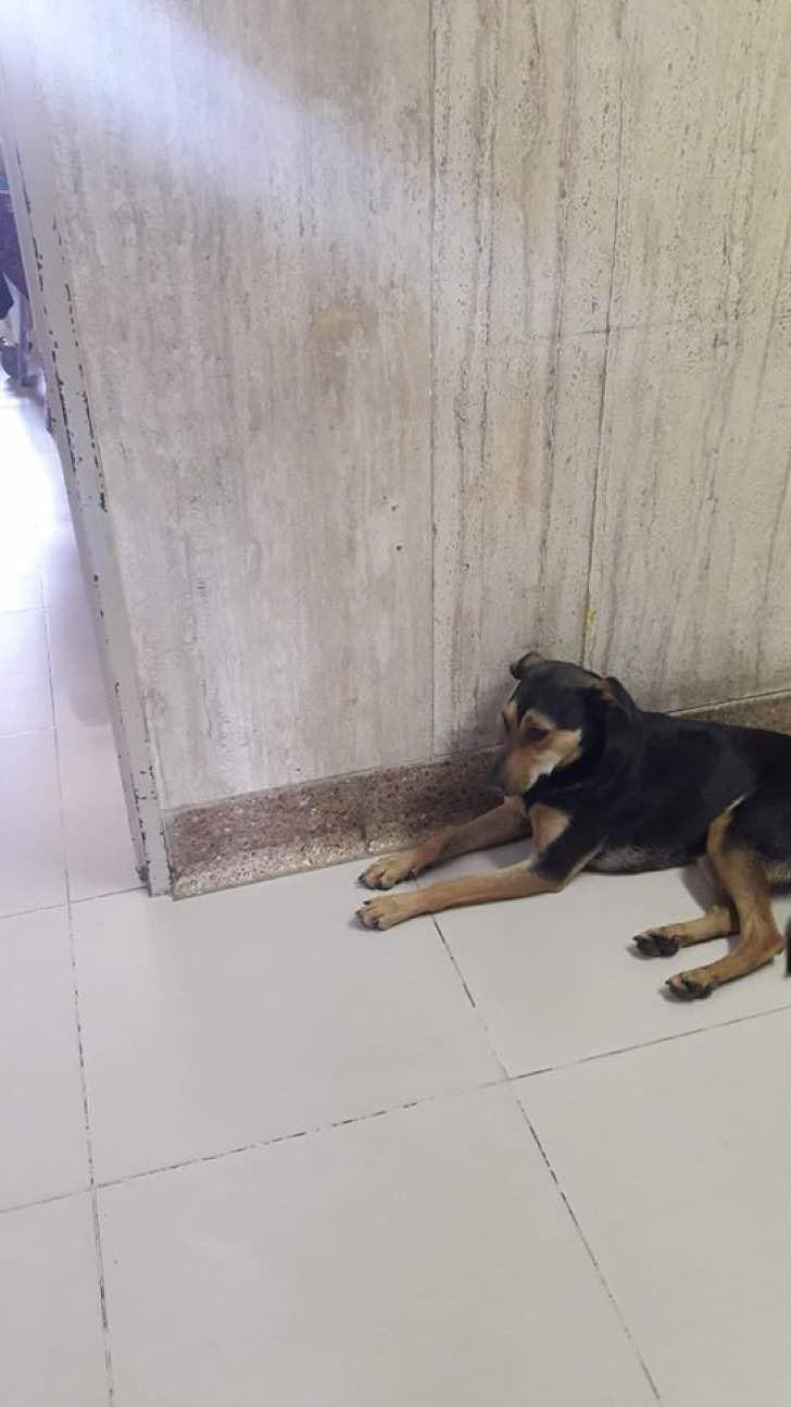 Cucciolo aspetta il padrone