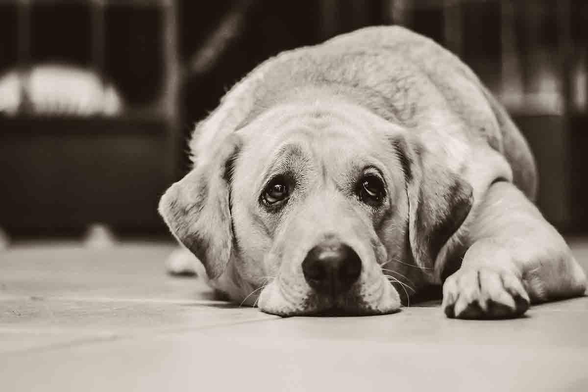 Cani stressati per colpa dei padroni