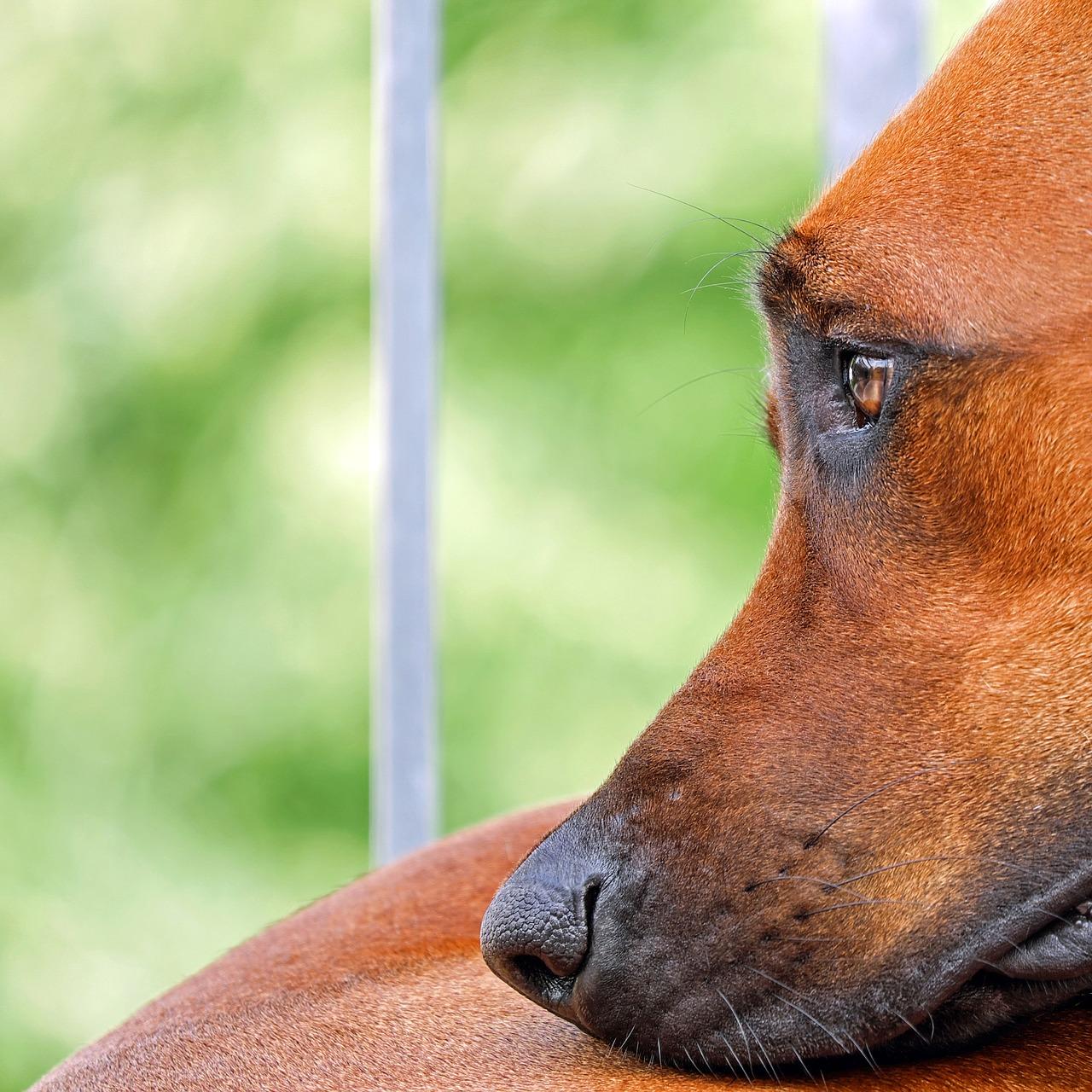 Cane sgridato dal proprietario