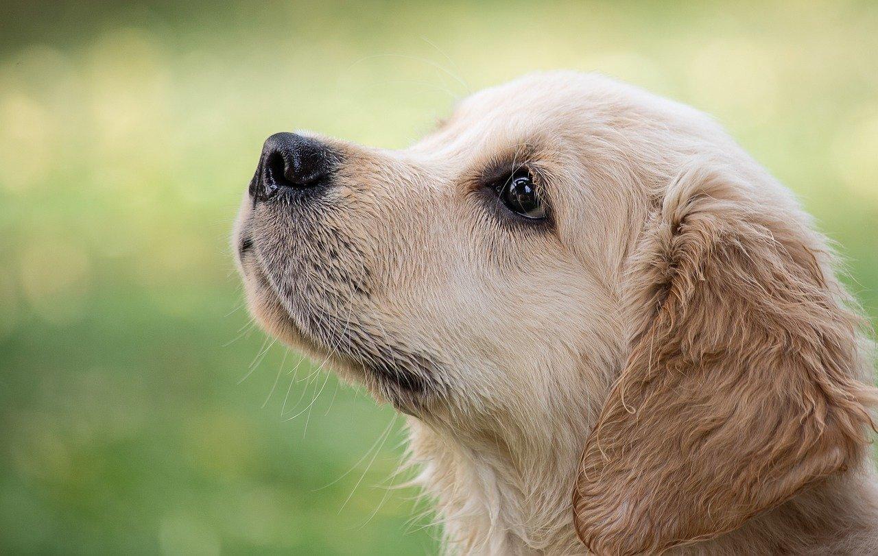 cucciolo con la bocca sigillata
