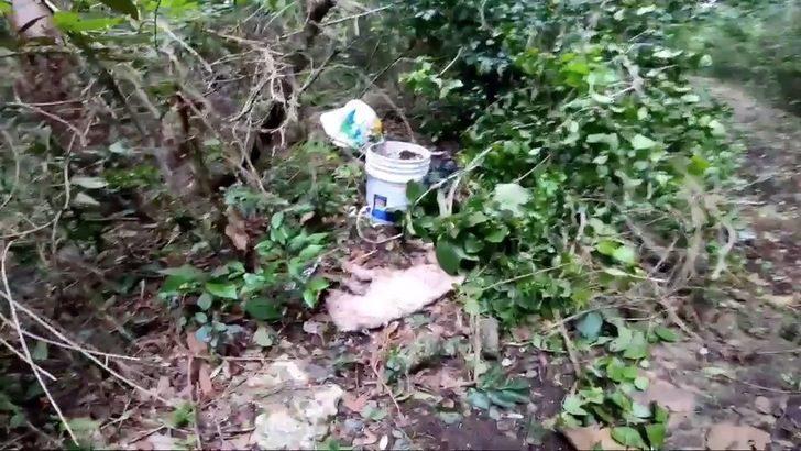 Cane abbandonato tra i rifiuti