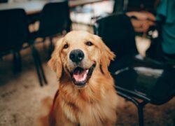 come-comunicano-cani