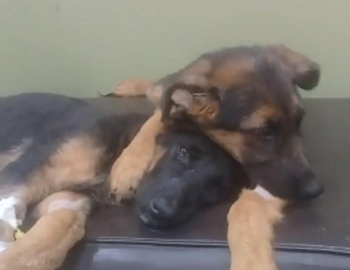 Cucciolo conforta sorellina