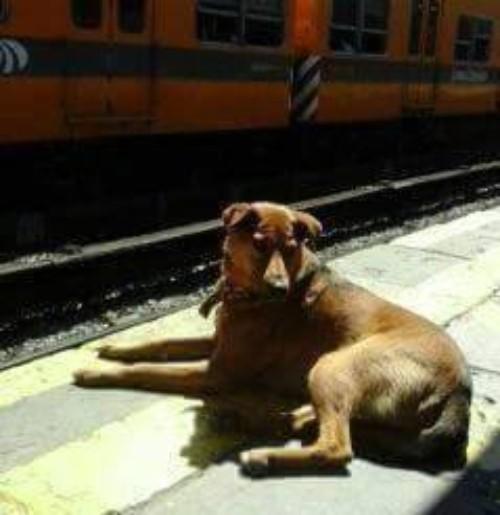 Cucciolo in attesa del padrone