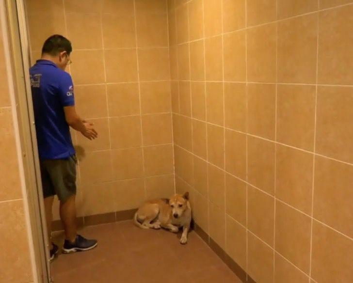 Joey il cucciolo da guardia