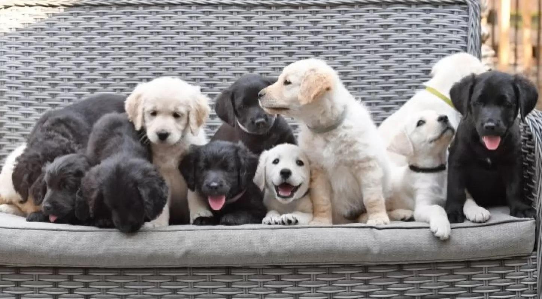 Boo e i suoi 12 cuccioli