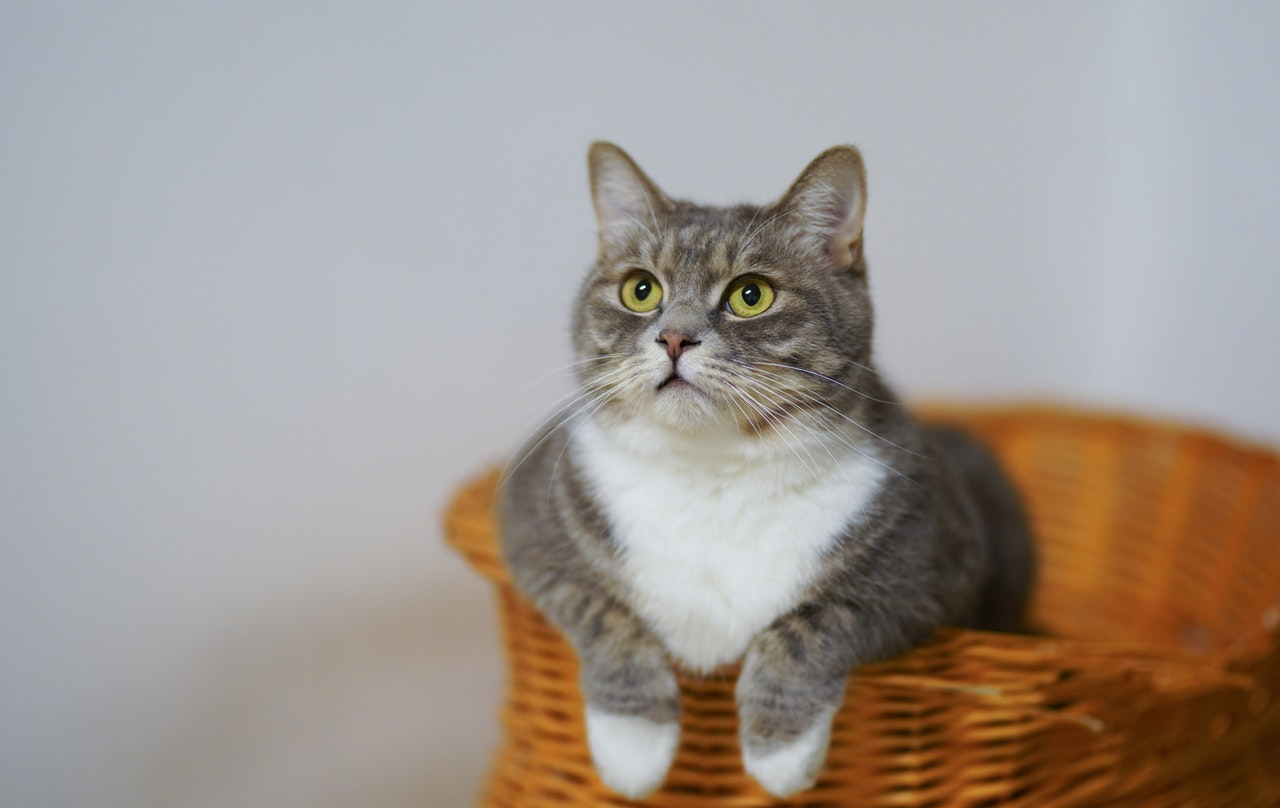 gatti-paurosi