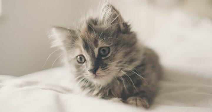 Gattina non è felice perché?