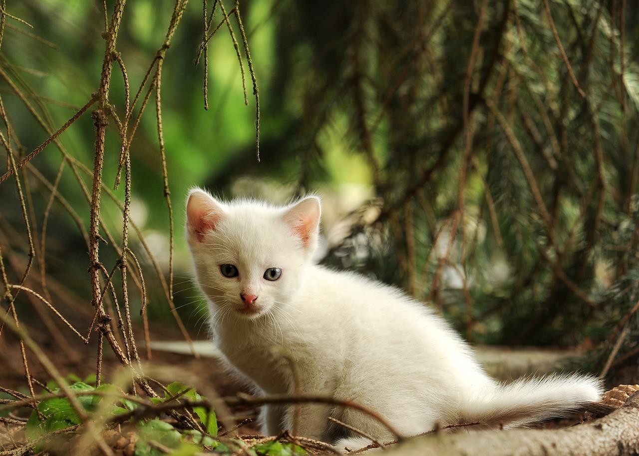 Gattino randagio adotta una famiglia