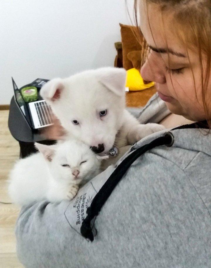 Cane e gatto bianchi