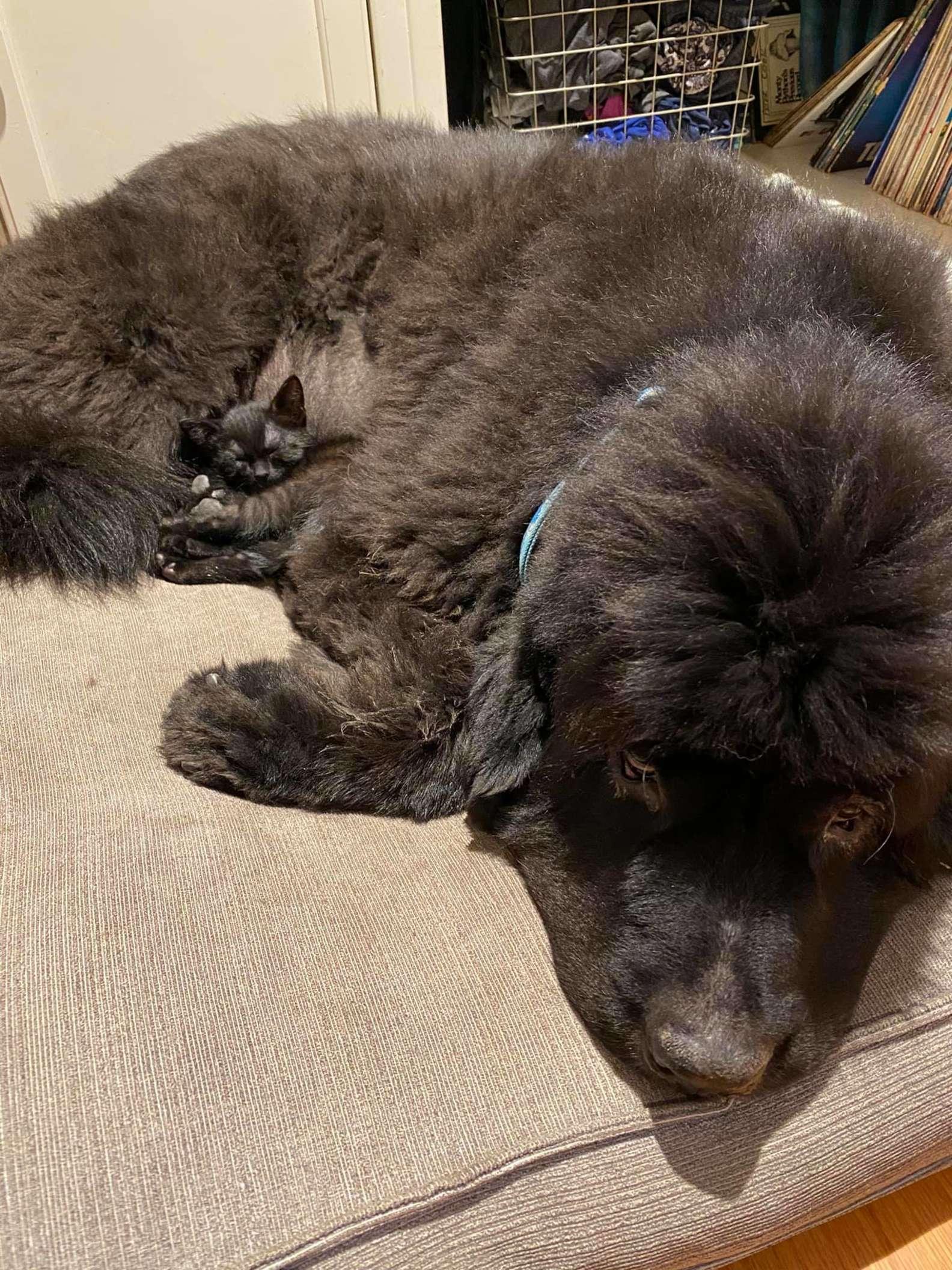 Micio e cane amici per la pelle