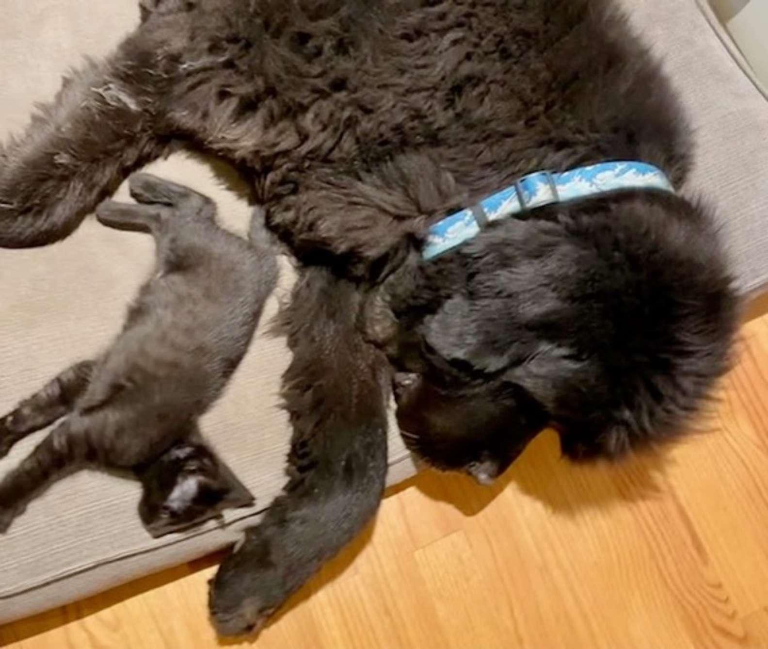 Basil e Angus migliori amici