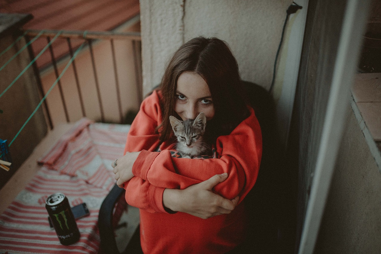gatto-compagnia