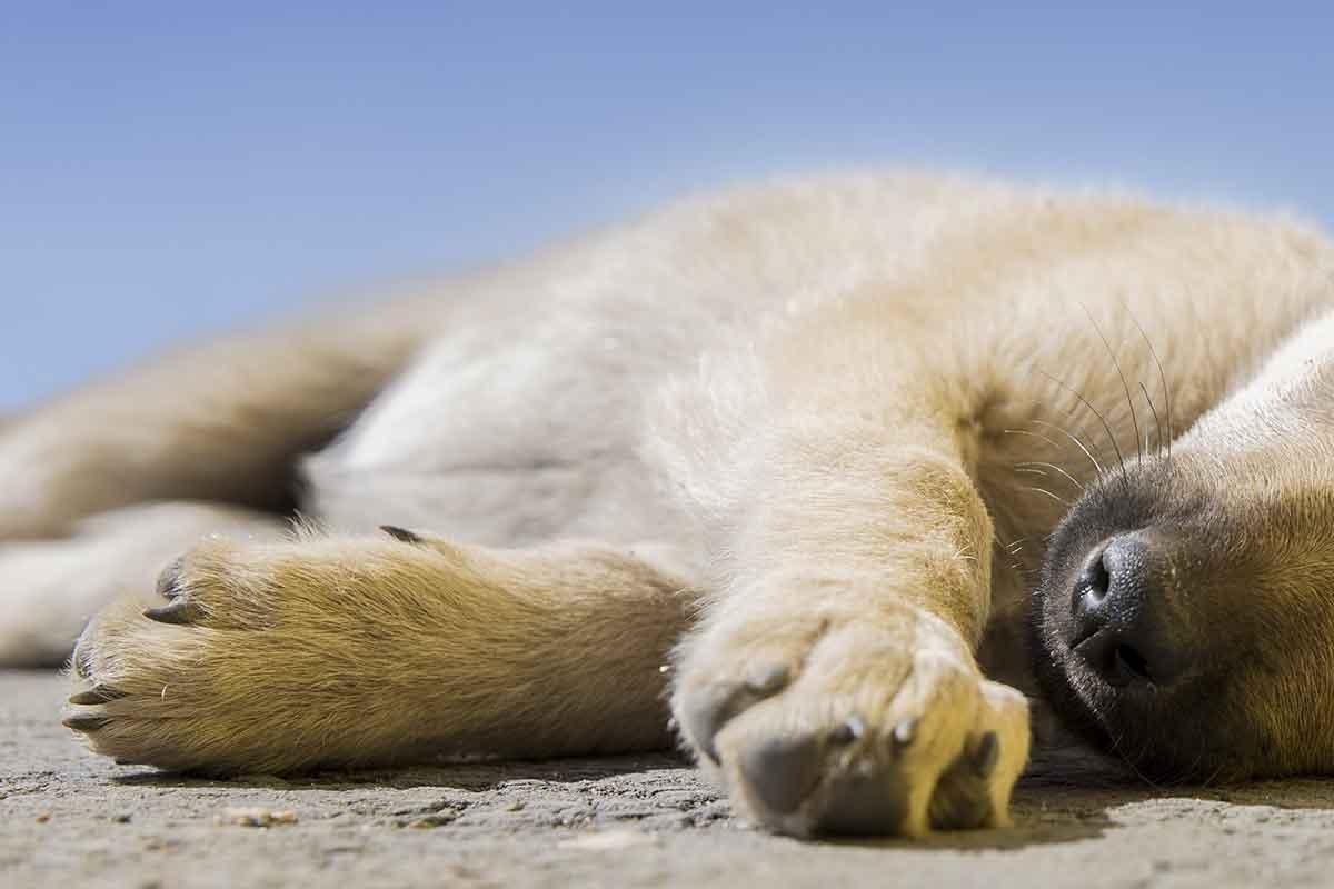 cane di 20 anni abbandonato