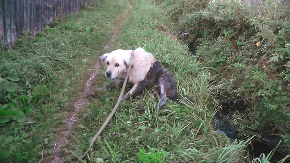 Cagnolino anziano trovato in un fosso