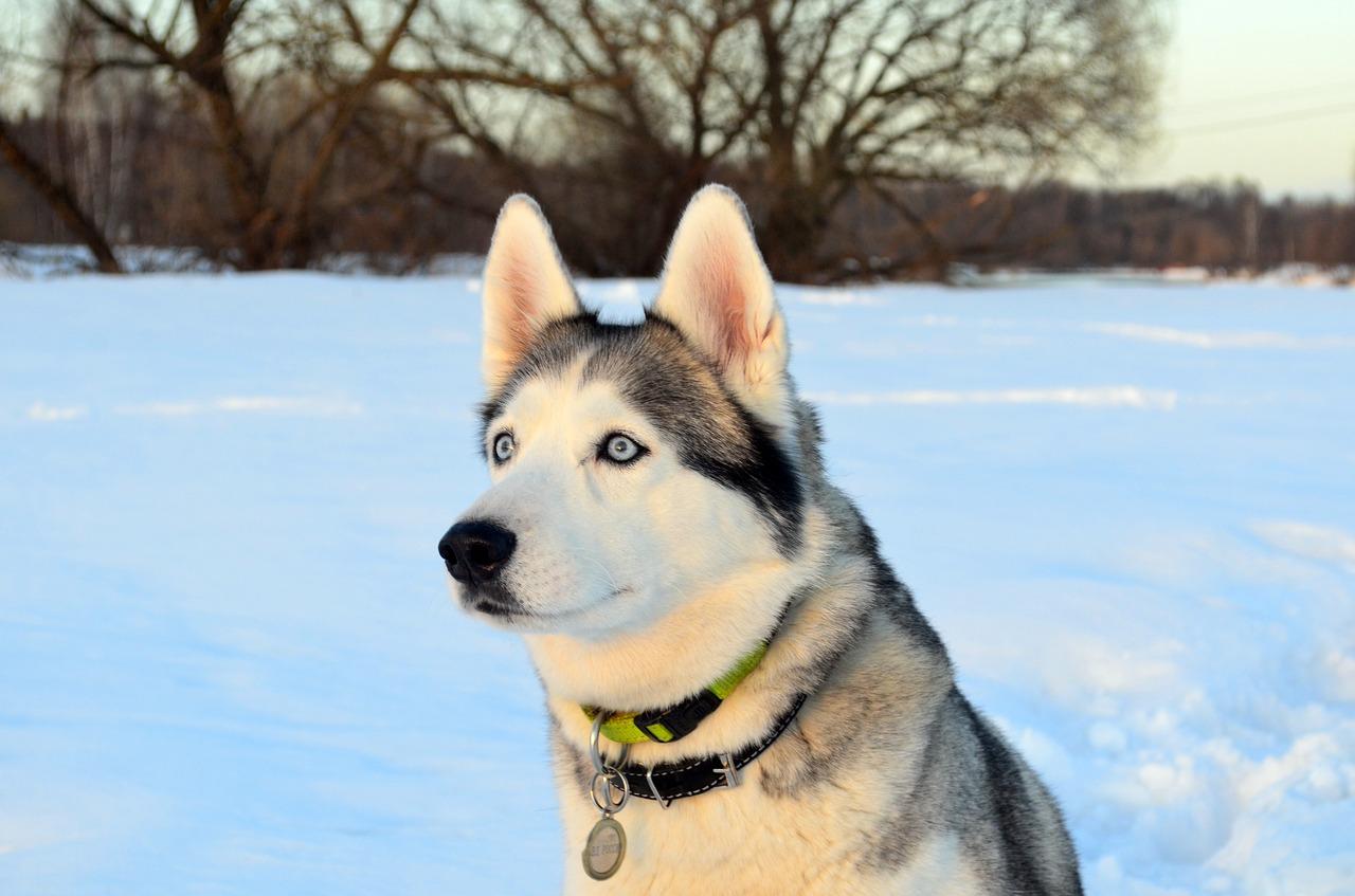 Cane in mezzo alla neve