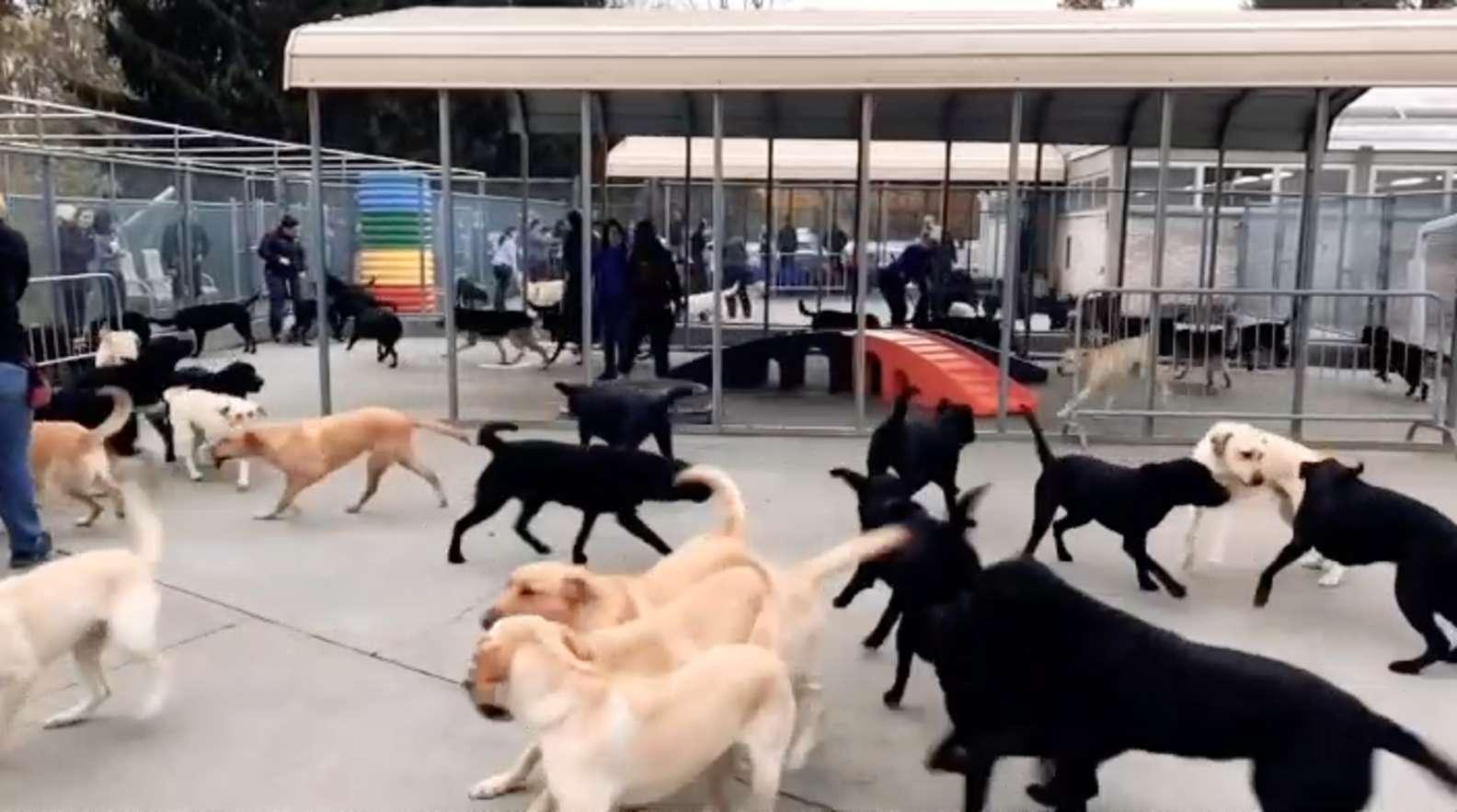 L'addestramento in un centro per cuccioli