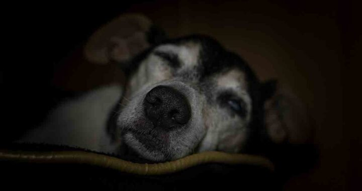 cane del rifugio