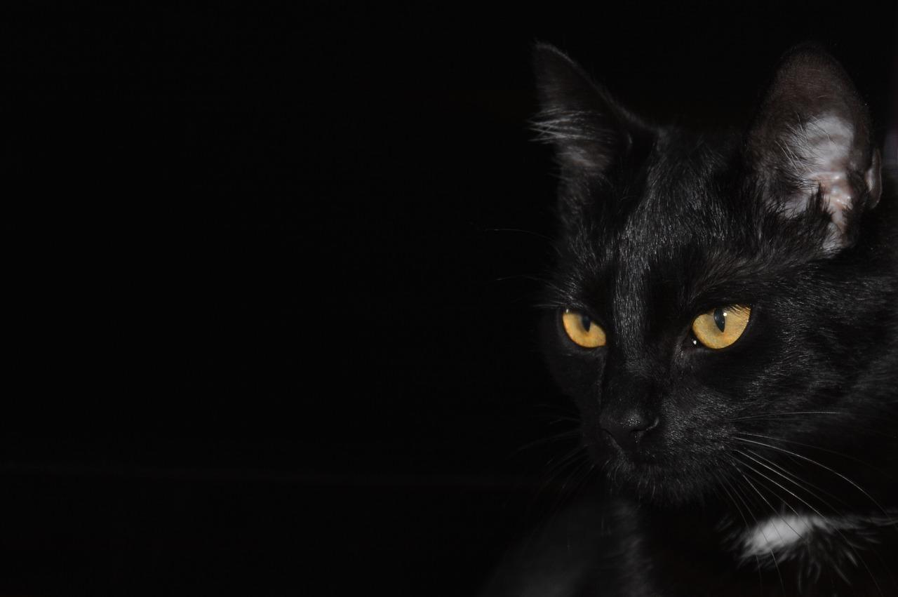 Salvataggio del gattino nero