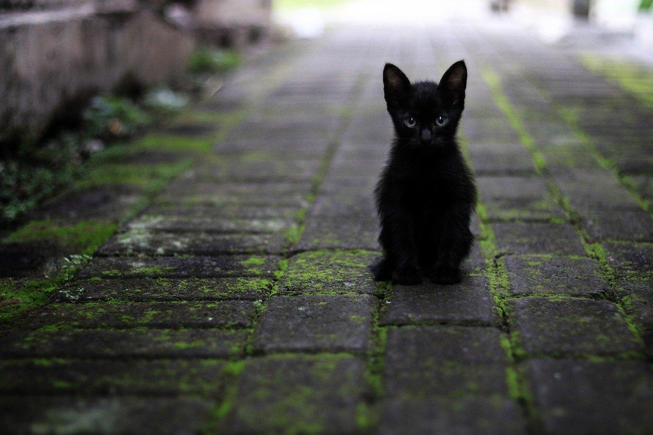 Un micio che vive da solo in strada