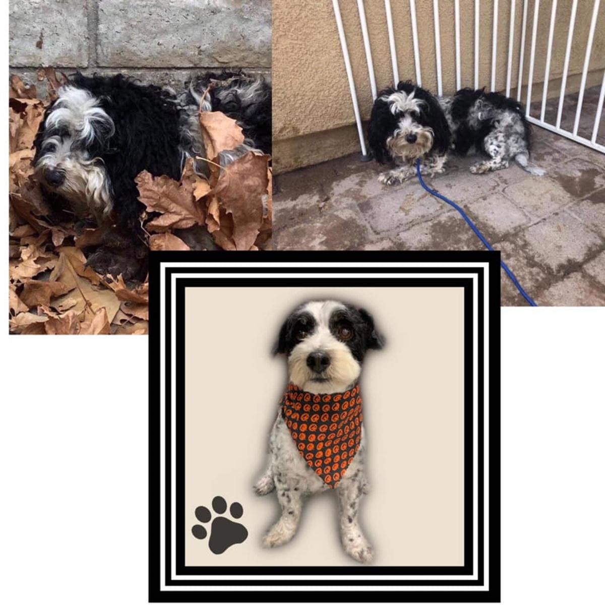 Faith e il cane abbandonato