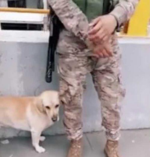 Il cucciolo e il militare