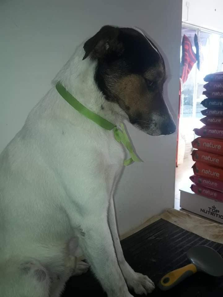 Cucciolo che ha perso la vita