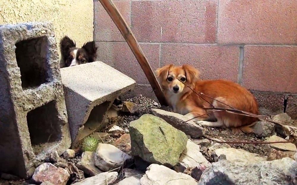 Cuccioli nascosti nel quartiere