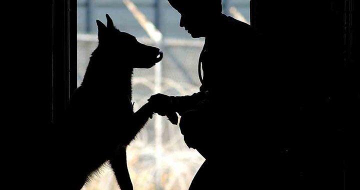 Marine incontra cane zoppicante