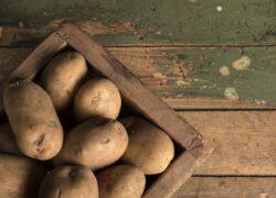 gatto - ricetta - patate