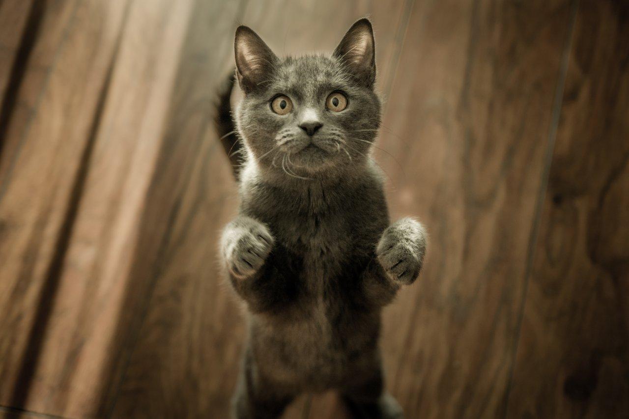 paura-gatti