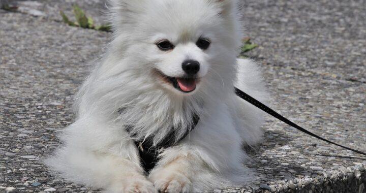 cane fuori nel coprifuoco