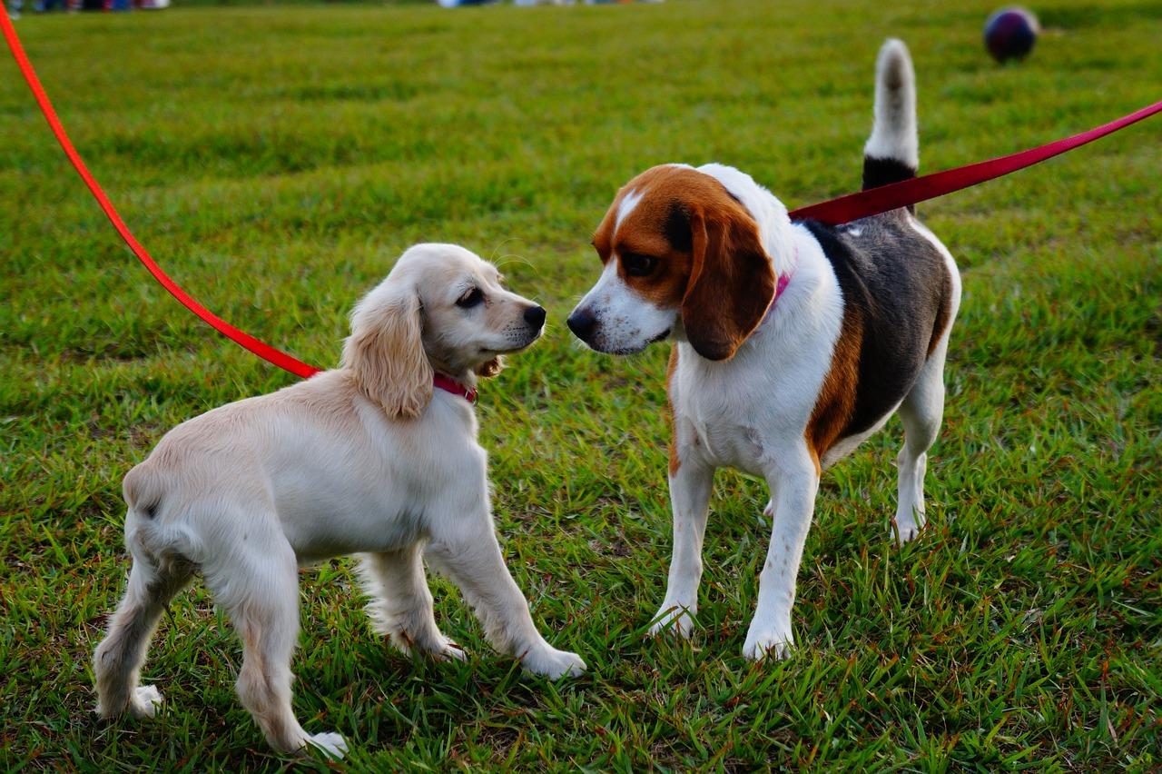 Incontrarsi tra cuccioli al parco