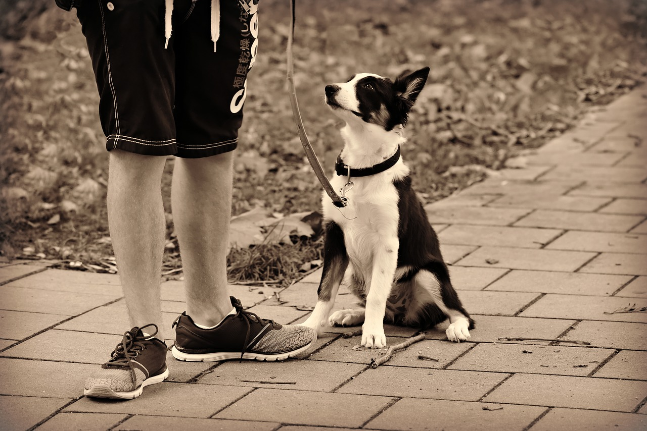 Cane e proprietario in giro