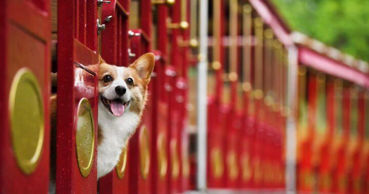 Cane sulla metro