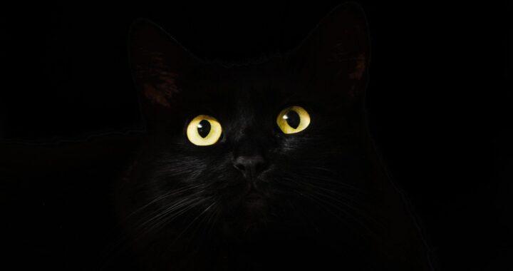 Gatto nella foto