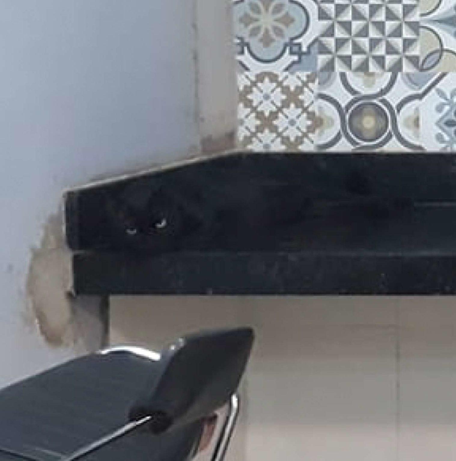 Chiquinho il gatto nero